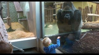 Gorilla and the Child - Der Gorilla und das Kind