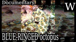 BLUE-RINGED octopus - WikiVidi Documentary