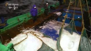 EBS 다큐프라임 - Docuprime_백성의 물고기 3부 행복한 비린내, 고등어_#001