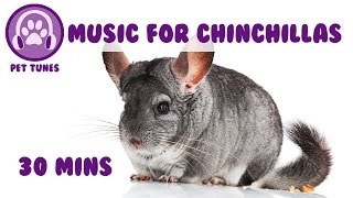 Music for Your Chinchillas! Chinchilla Music, Relaxing Music for Chinchillas