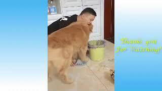 pets funny