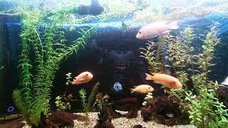 Aquarium, gefilmt mit DJI Phantom Drohne HD