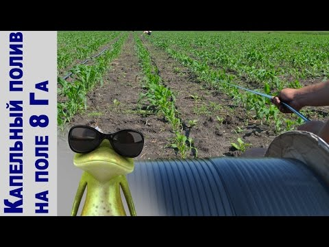 Система капельного орошения поля кукурузы 8Га! АрхиФлора 2015