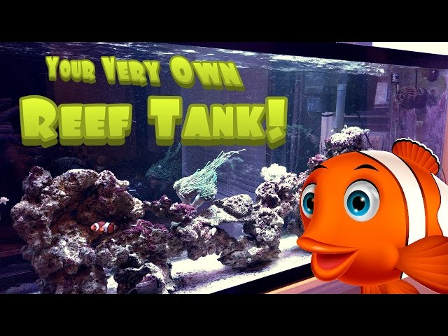 How to Setup a Simple, Easy and Inexpensive Reef / Saltwater Aquarium Tank - 55g Saltwater Tank