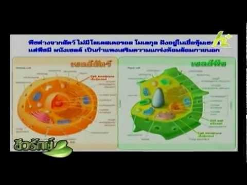 รหัส thrombophlebitis 10 ในผู้ใหญ่ ICD-