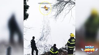 Firefighters See Dog Drowning In Frozen Lake And Put Their Lives On The Line For Risky Rescue