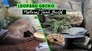 Natural Arid Tank Build // LEOPARD GECKO