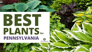 Best Plants for Landscaping in Pennsylvania - Native Plants