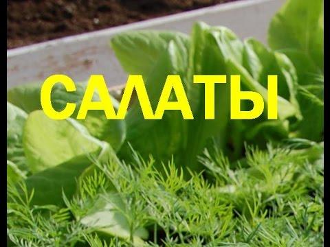 Картофельный салат с курицей и овощами  Пошаговый рецепт с фото