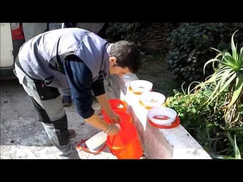 Punteruolo rosso:cattura con trappole ecologiche