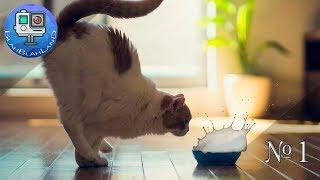 Смешные приколы с Кошками и Котами | #1 | Funny tricks with cats