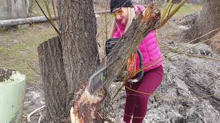 Awesome Video! Pretty Girl ChainSaw  Top Big Tree Cutting Down Extreme Felling Wedge Fastest Skill