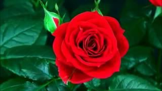 Bloom - wildblossomsband