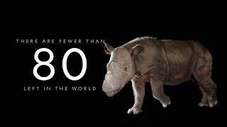 Want to help us save the Sumatran rhino from extinction?