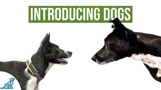 How To Introduce Your Puppy To Your Other Dog(s) - Professional Dog Training Tips