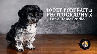 Pet Photography | Top 10 Tips & Small Home Studio