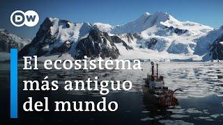 Antártida: Un mensaje de otro planeta   DW Documental
