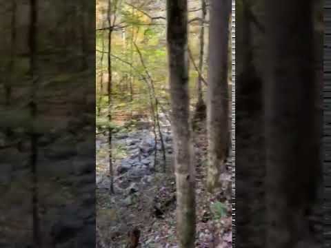 Video Of Walls of Jericho - Turkey Creek Backcountry Campsite, AL