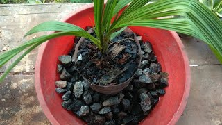 how to make orchid potting mix at home | Growing orchids