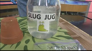 Take 2 Rat Lungworm and slug prevention