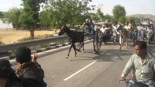 Horse Race Jaipur