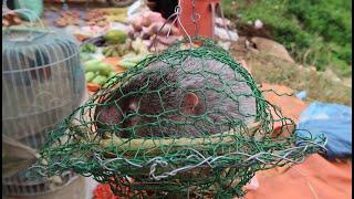 Hàng Trăm Con Dúi Rừng Tại Chợ Biên Giới Việt Trung - Chợ Biên Giới Mùa Đông Lạnh Giá Có Gì ???