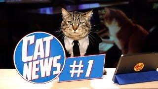 Cat News #1