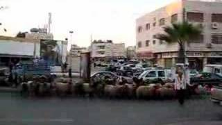 preview picture of video 'Shepherd leading flock across busy road in Amman, part 3'