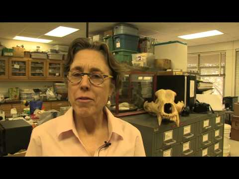 GeoScience - What is a Paleontologist?