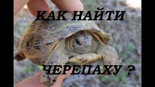 Как на озерах ловить черепаху