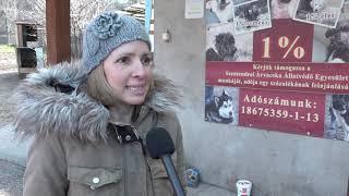 TV Budakalász / Budakalász Ma / 2020.02.10.