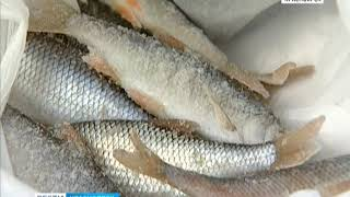 Правила рыболовства красноярского края 2019