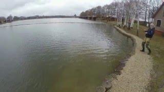 Рыбалка на риге золотой сазан