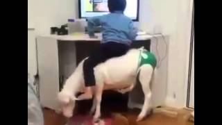Funny Videos - Most Funny Wats App Videos