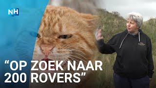 Kattenjagers van start op Texel