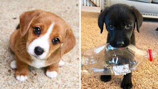 Cute baby animals Videos Compilation cutest moment of the animals - Cutest Puppies #2