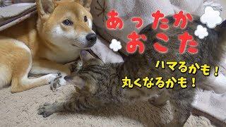 子猫初めてのおこた!柴犬と一緒にぬくぬく♡---Kotatsu is warm----
