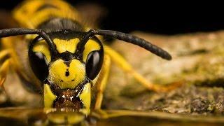 Классный фильм!!!  Насекомые   Документальный фильм про насекомых канала  BBC