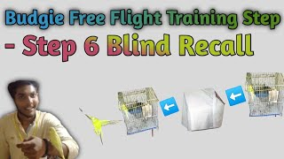 (Step6)How to teach Blind Recall Training your parrot|budgie parrot free flight training (step6)