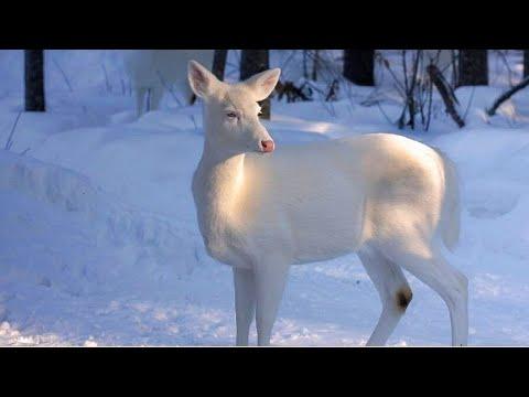 Ф.Шопен - Ноктюрн 20 - И первый снег...- F. Chopin - Nocturne - The first snow