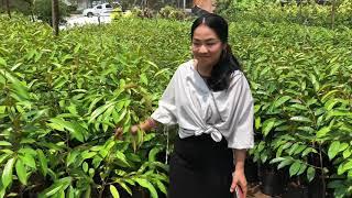 preview picture of video 'สัมภาษณ์ เพื่อนสมาชิกในแวดวงการทุเรียน จันทบุรี | ลุงหมูป้าตุ้ยพันธุ์ไม้'