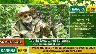 Parkinson Treatment with Kangra Herb