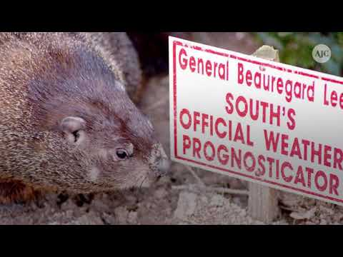What to know about Georgia celebrity groundhog Gen. Beauregard Lee