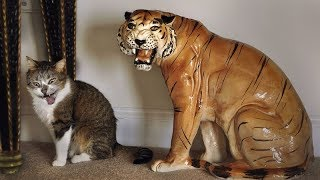 I BET these CATS will make you LAUGH. - Funniest CAT videos ot the MONTH