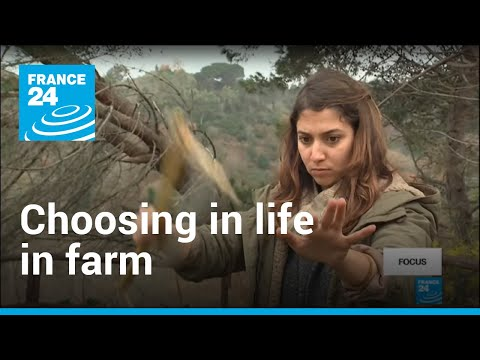Why Italian graduates are choosing life on the farm