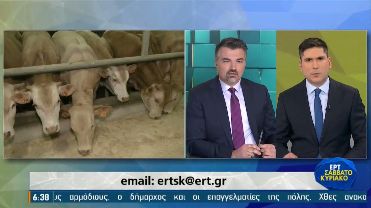 Αγελάδες καλοαναθρεμμένες με  Μπαχ και Μότσαρτ   04/04/2021   ΕΡΤ