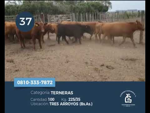 Lote Hembras - Tres Arroyos