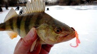 Ловля хищной рыбы зимой на силиконовые приманки
