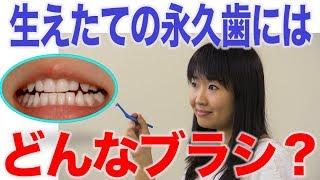 生え替わり期の歯みがきはワンタフトブラシがオススメ?