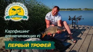 Как правильно прикормить карпа рыбалка для начинающих